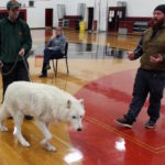 Atka the Wolf CHS Biology 2015